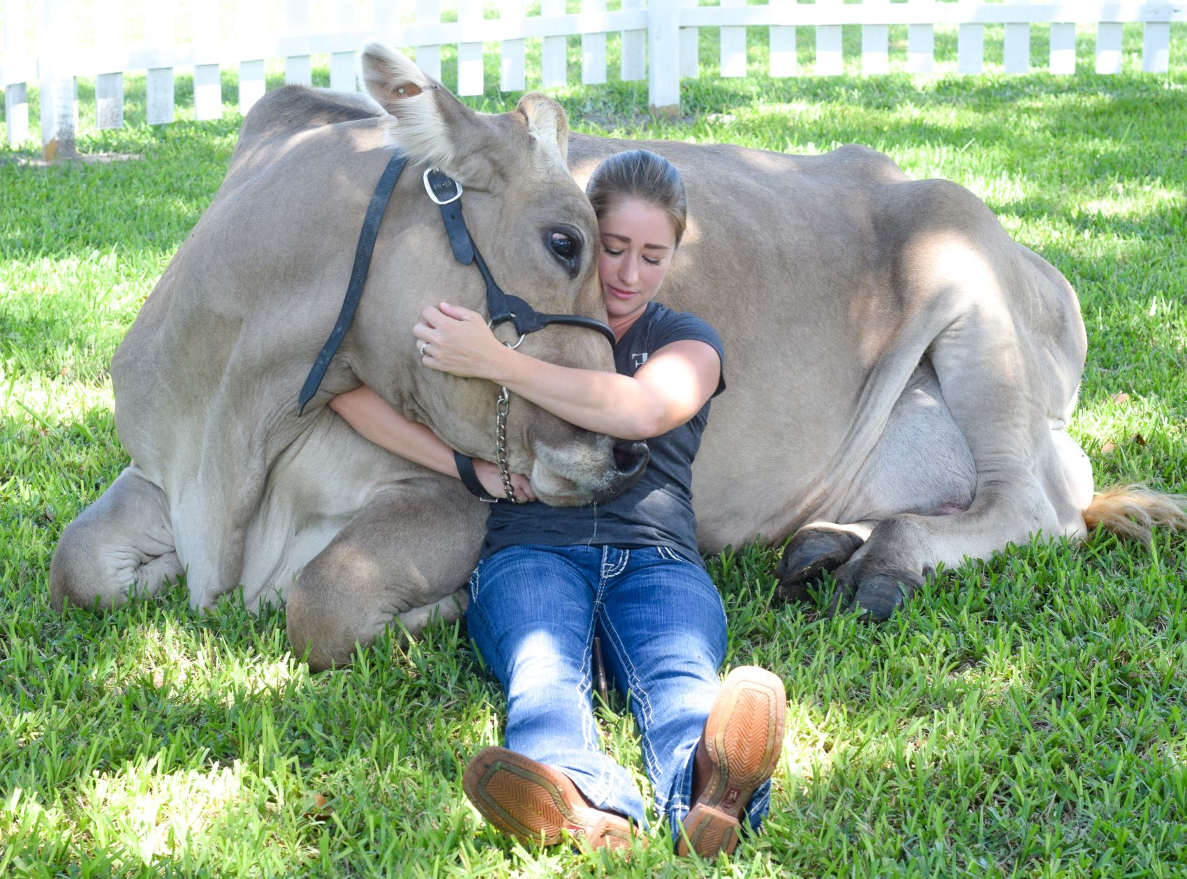 Cow Cuddles at The Farm Experience Palmetto FL